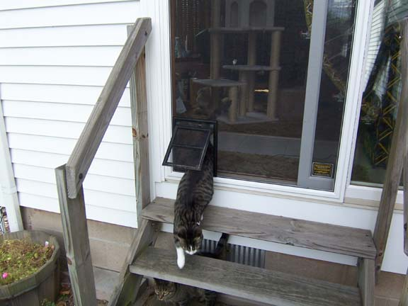 Famous Yard Cat Fencing - Cat Chat - Cat-World - Cat Forums & Cat Message  TB69